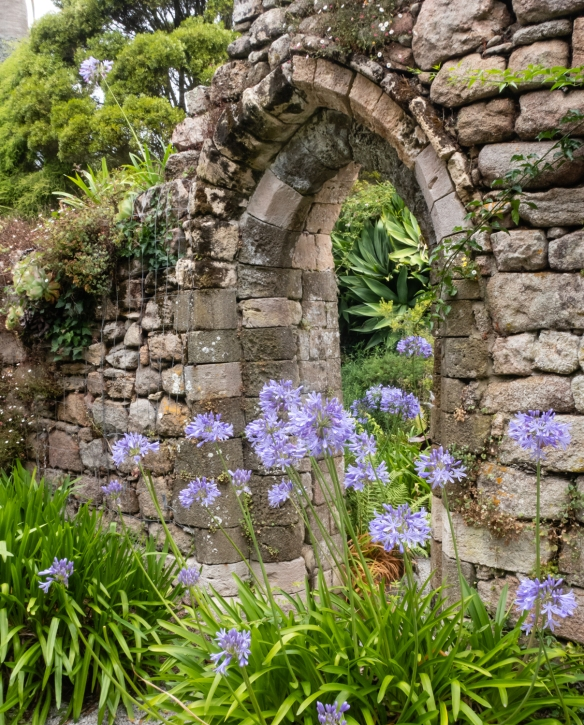 Tresco Abbey Garden, Tresco Island, Isles of Scilly, United Kingdom #4 -- remains of the 12th century St. Nicholas Priory