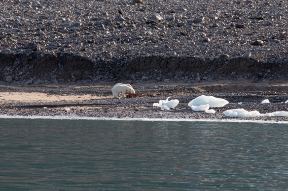 A great spot for a feast of a luncheon! -- Ellesmere Island, Nunavut, Canada