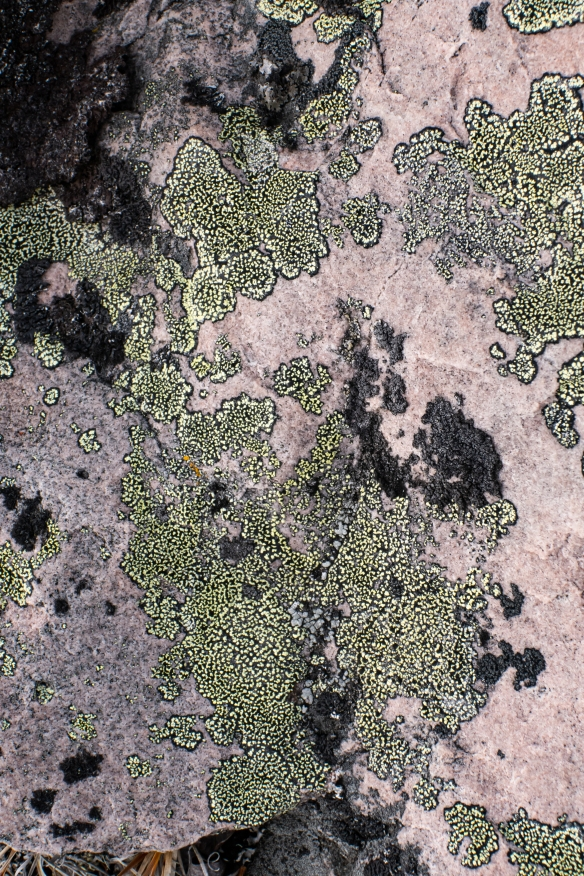 Lichens are the oldest life forms on the tundra, pictured here on an erratic boulder, Nakyoktok River waterway, Johansen Bay, Victoria Island, Nunavut, Canada