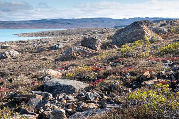 "Stepping ashore at Port Epworth, southwest of Cambridge Bay on Victoria Island in the Canadian High Arctic region of Nunavut, was our first outing on the ""mainland"" – the terrain near the strait was tundra littered with erratic boulders"