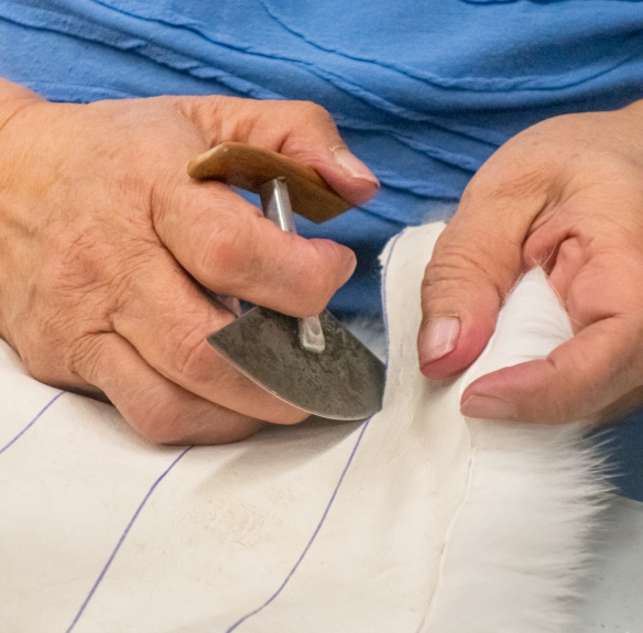 Using an ulu knife for cutting the rabbit fur trim for out mittens at the Ulukhaktok Community Hall, Ulukhaktok, Victoria Island, Northwest Territories, Canada