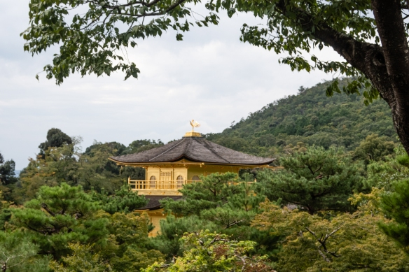 Kinkaku (The Golden Pavillion) is a shariden, a Buddhist hall containing relics of Buddha; it is part of Rokuon-ji Temple, a Zen Buddhist temple, Kyoto, Honshu Island, Japan – viewed here from the forested hill leading to the Sekka-tei Teahouse