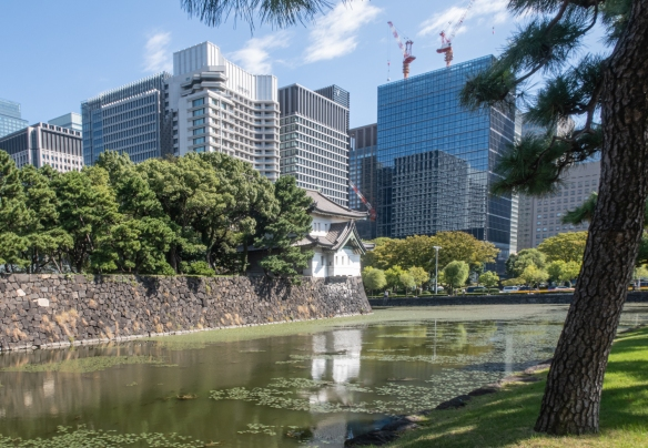 The Gardens of the Imperial Palace, Tokyo, Honshu Island, Japan #4 – a more expansive view of some of the Marunouchi district high rise office buildings adjacent to the Imperial Gardens