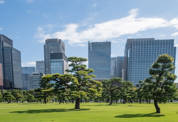 The Gardens of the Imperial Palace, Tokyo, Honshu Island, Japan #6 – the manicured lawn and carefully trimmed and maintained pine trees presented a spectacular screen in front of the Marunouchi district office buildings