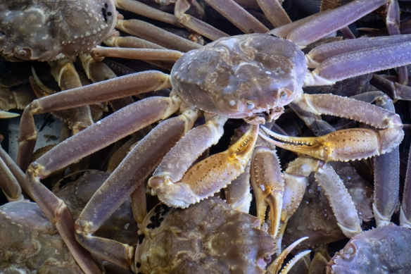 """This crab looked like it just finished yoga and was saying """"Namaste"""", Jagalchi Seafood Market, Busan, South Korea"""