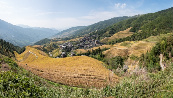 A panorama of the Longji Rice Terraces, literally Dragon's Backbone Rice Terraces, regarded as the most beautiful rice terraces in the world, Ping'an Zhuang Village (平安寨), near Guilin, Guangxi, China