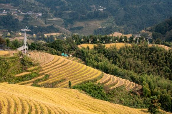 Jinkeng Red Yao Terraced Fields, Dazhai Village in the Longji Rice Terraces region, near Guilin, Guangxi, China #2