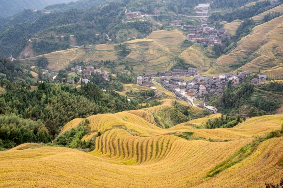 Jinkeng Red Yao Terraced Fields, Dazhai Village in the Longji Rice Terraces region, near Guilin, Guangxi, China #4