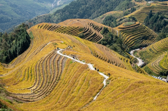 "Ping'an Zhuang Village Terraced Fields, or Dragon's Backbone Rice Terraces, near Guilin, Guangxi, China #2; a close up of a section of the so-called ""Nine Dragons and Five Tigers"""