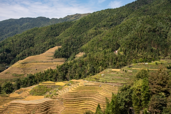 Ping'an Zhuang Village Terraced Fields, or Dragon's Backbone Rice Terraces, near Guilin, Guangxi, China #3