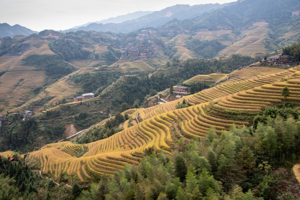 The Jinkeng Red Yao Terraced Rice Fields are inside the Dazhai Village, with mountains on all sides; here the viewing was more rural and quieter than our first stop at Ping'an Zhuang Village [see our previous blog post]; near Guilin, Guangxi, China