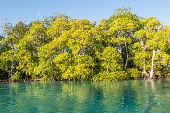 Cruising the lagoon of Boo Kecil Island, Boo Islands, Raja Ampat, Indonesia #3; mangrove trees lined the channel into the lagoon