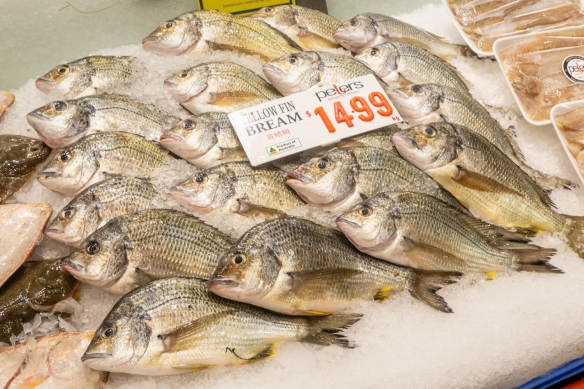 Yellow fin bream, Sydney Fish Market, Sydney, New South Wales, Australia